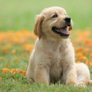 dog puppy on garden royalty free image 1586966191