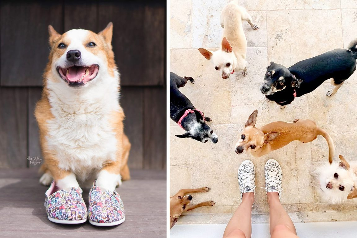 Skechers Donates Over $6 Million to Save Dogs and Cats