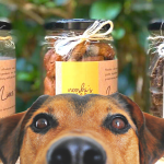 Nooshi's Nibbles; cats and dogs treats