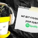 Are Your Houseplants Picking Up The Good Vibrations? Cause Spotify Data Shows Music for Plants is On The Rise In Egypt!